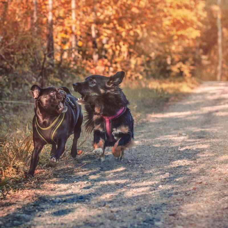 Hundeshooting Outdoors in Zürich